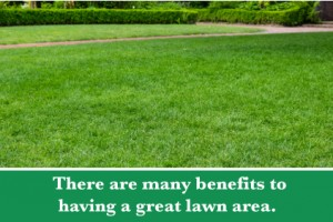 4-lawn