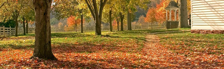 fall-cleanup-header