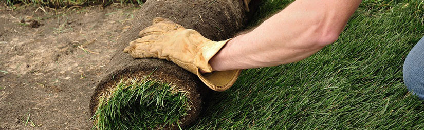 lawn-seeding-header