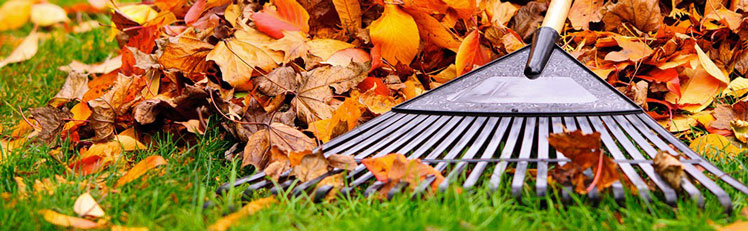 leaf-removal-header