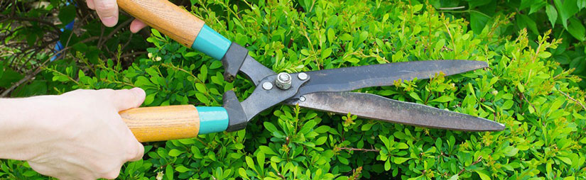 plant-pruning-header